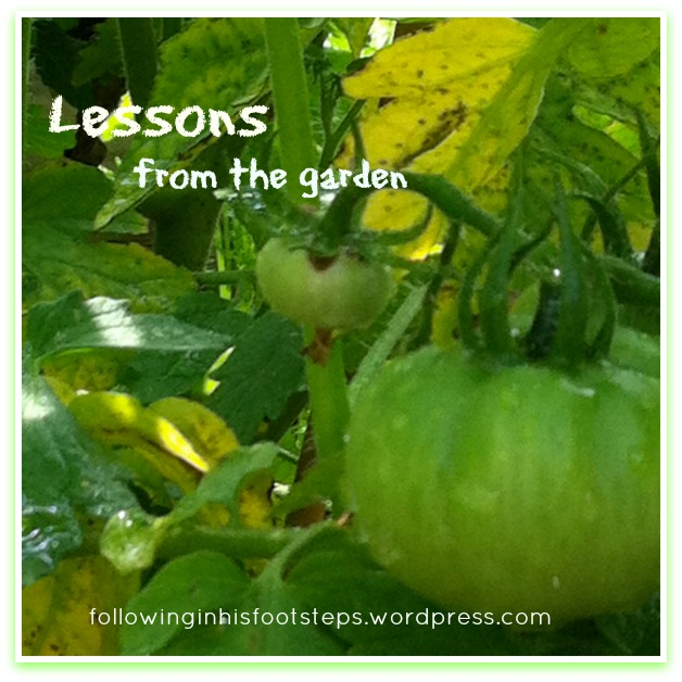 4 Lessons I Have Learned Form Tending My Backyard Garden This Summer www.followinginhisfootsteps.wordpress.com